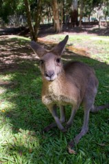 Blog_Australia_33_Web