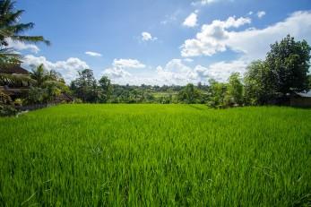 180412-26_Bali-090_Web