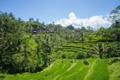 180412-26_Bali-105_Web